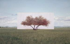 Myoung Ho Lee 2011 arbre n° 2 photographie
