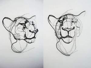 David Oliveira études de lionnes fil de fer