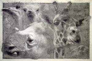 Quentin Garel, 2008, études d'animaux, fusain sur papier, 100x150
