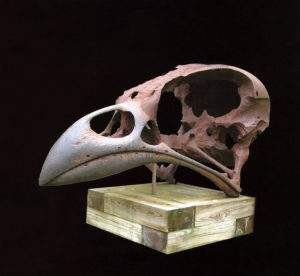 Quentin Garel,2005, crâne d'oiseau, fonte de fer 200x110x90