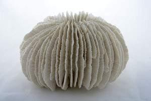 Simone Pheulpin, corail-fungia, sculpture de coton