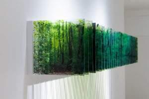 Nobuhiro Nakanishi 2014 lumière de la forêt