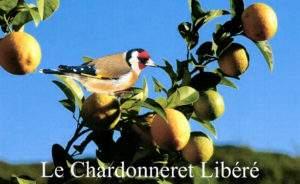 Chardonneret Libéré